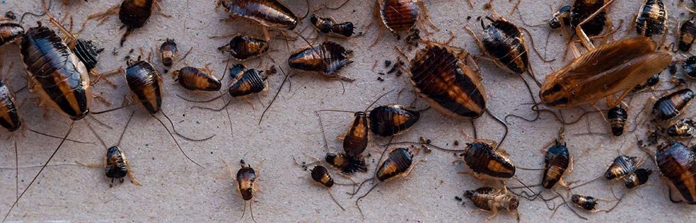 , Pest Control, Tanler Termite and Pest Control