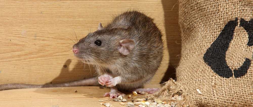 , Rodent Control, Tanler Termite and Pest Control