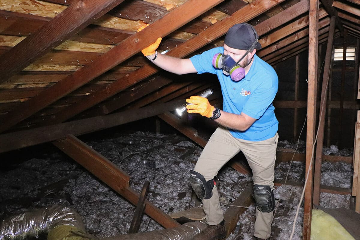Termite Inspection Los Angeles Inspectors Tanler